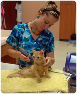 Cat Pet Reduce Chronic Pain