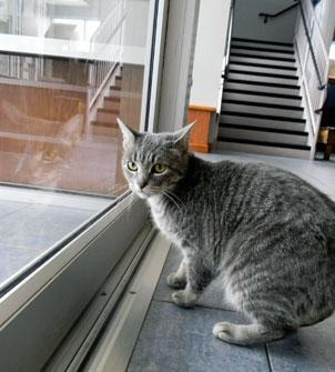 Sally in the lobby, waiting for a new home, see our Animal Adoption pages
