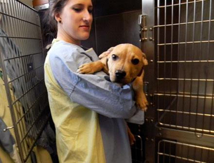 Puppy in isolation