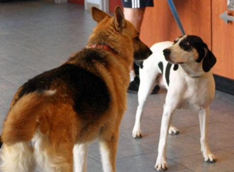 Dogs in waiting area