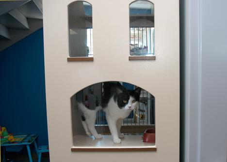 Milo in townhouse